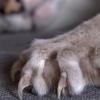 У кошки выпадают когти — это тревожный признак?