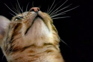 Почему у кошки выпадают усы?