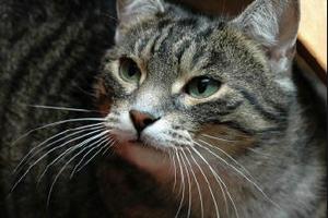 у кота ломаются усы