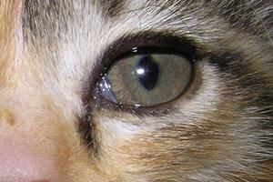 у кота мутный глазик