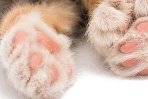 у кота облазят подушечки лап