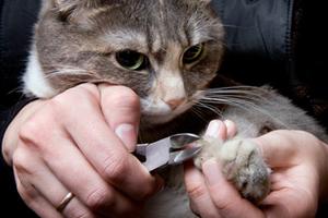 у кота слоятся ногти