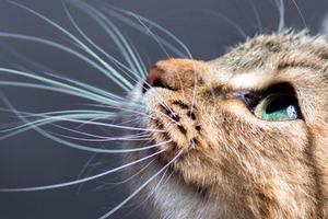 у кота выпадают усы