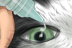 у котенка слезятся глаза