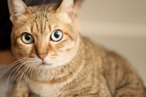 Стоит ли переживать, если у котенка сухой нос?