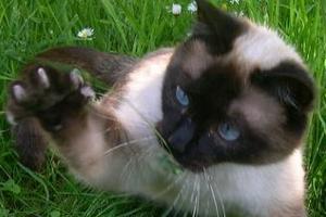 у котенка выпадают когти