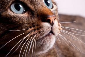 у котика ломаются усы