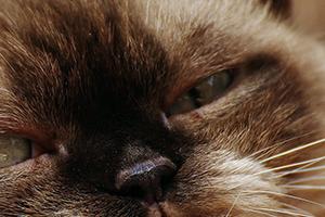 у котика мутный глаз