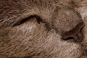 у котика не открывается глаз