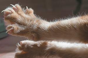 у котика слоятся ногти