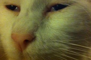 у котика текут сопли