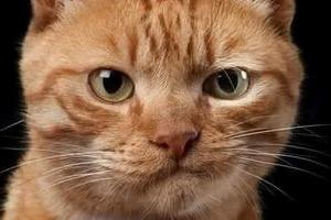 закисание глаз у котика