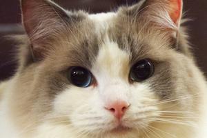 образование в ухе у кошки