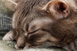 шишка в ухе у кота