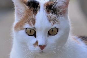 у кошки идет из носа кровь после удара