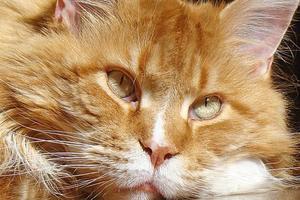у кошки идет кров из попы