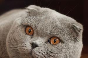 запекшаяся кровь в ухе у кошки