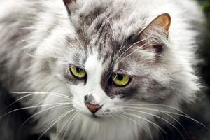 белые выделения из глаз у кошки