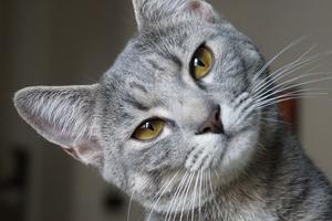 гнойные выделения из петли у кошки