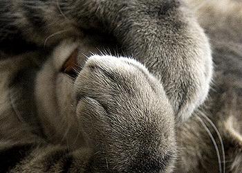 кошка чешет глаза