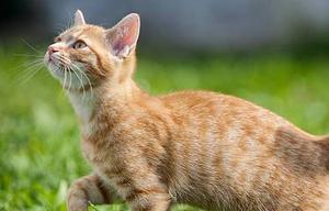 кошка ходит боком после стерилизации