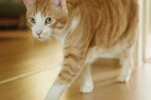 кошка ходит кругами