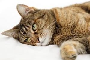 кошка падает на бок во время ходьбы