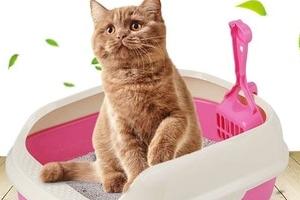кошка перестала писать в лоток после стерилизации
