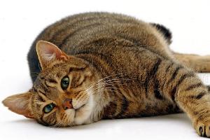 кошка постоянно падает на бок при ходьбе