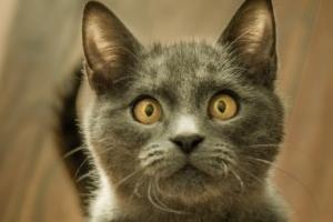 кошка приседает на задние лапки