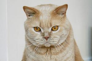 кошка приседает на задние лапы при ходьбе