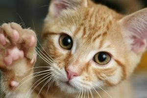 кошке трудно глотать воду