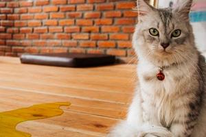 недержание мочи у кошки после родов