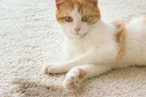 недержание мочи у кошки после травм