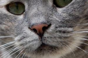 одышка у кошки после еды