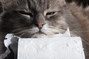 понос у котика после глистогонки