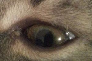 прозрачные выделения из глаз у кошки