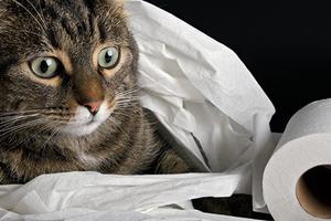 сильный понос у кошки после глистогонки