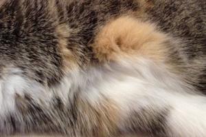 сочится шов после стерилизации у кошки