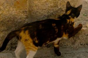 старая кошка ходит по кругу