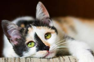 у кошки болит живот и понос