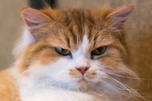 у кошки болит живот и рвота