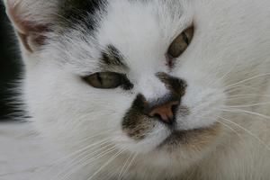 у кошки дыхание со свистом