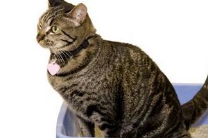у кошки недержание кала после родов