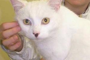 у кошки покраснела кожа вокруг глаз