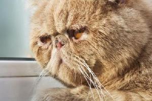 у кота глаз налился кровью