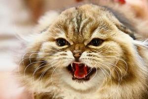 выделения из петли у кошки после стерилизации