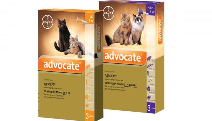 адвокат против ушного клеща у кошек