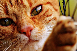 кошка чешет мордочку