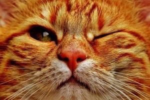 кот щурит один глаз